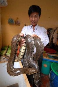 làm giàu từ nuôi rắn